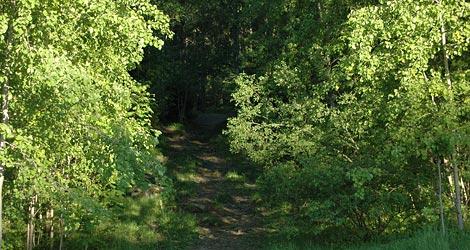 Boler-Bolerskogen-skog